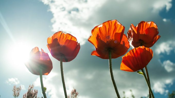 Nature Summer Flower Bloom 53013