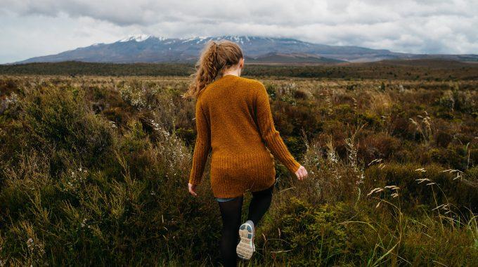 A Walk Through The Wilderness